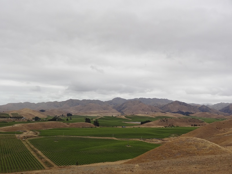 Marlborough2